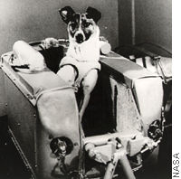 Animal in space the first animal in space was a female dog named laika