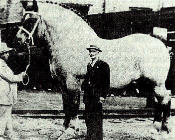 http://www.greatbluemarble.com/_borders/horse_large_belgian.jpg